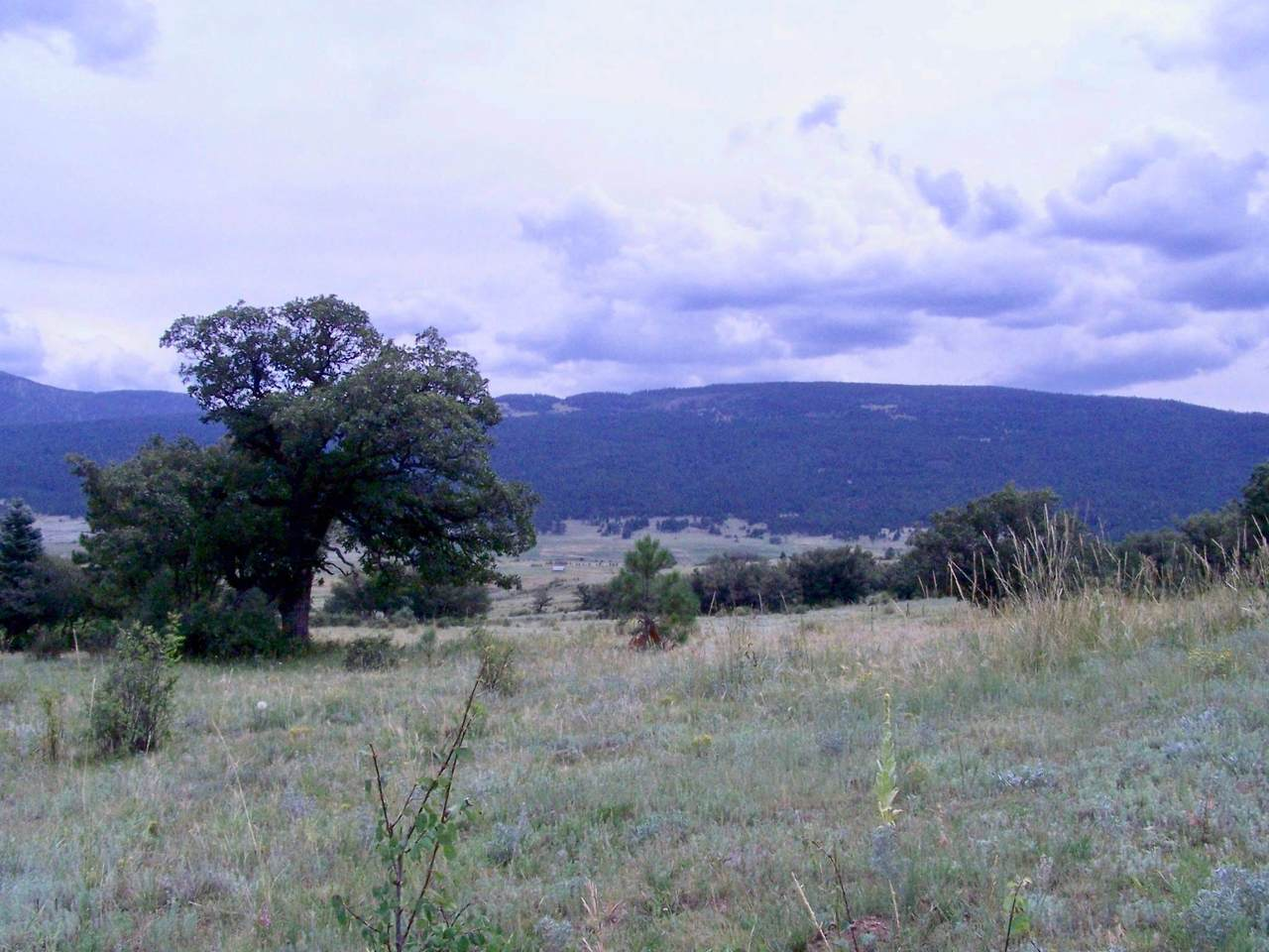 Ranch - Photo 1