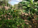 Lacuna Hacienda Mexico - Photo 34