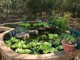 Lacuna Hacienda Mexico - Photo 38