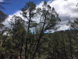 143 La Cueva Road - Photo 10