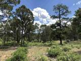 58 Silver Feather Trail - Photo 1