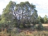 3.548 Acres Lower La Joya Road - Photo 6