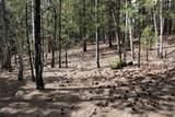 0 Squirrel Trail - Photo 16
