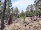 1198 Acres Off Of Goat Hill Road - Photo 11