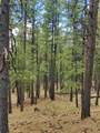 1198 Acres Off Of Goat Hill Road - Photo 4