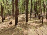 1198 Acres Off Of Goat Hill Road - Photo 5