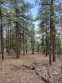1198 Acres Off Of Goat Hill Road - Photo 6