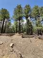 1198 Acres Off Of Goat Hill Road - Photo 7