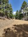 1198 Acres Off Of Goat Hill Road - Photo 8
