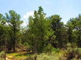 TBD Forest Service Rd. 556 - Photo 4