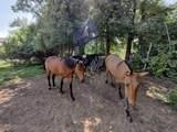 151 Camino De Los Ranchos - Photo 50