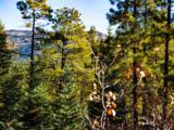 3 Ponderosa Pines, Buckman - Photo 23
