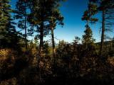 3 Ponderosa Pines, Buckman - Photo 5