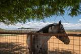 39 Rancho Alegre - Photo 19