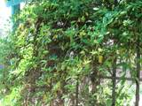 34869 Us Hwy. 285 - Photo 43