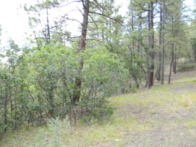 Block 1, Lot 19, Brazos Estates, Chama, NM 87520 (MLS #201605048) :: The Very Best of Santa Fe