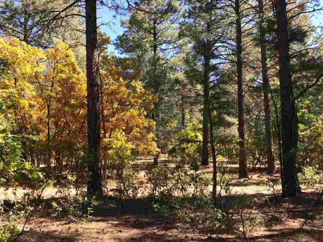 Lot 20, Blk 2, Brazos Estates, Chama, NM 87520 (MLS #201704784) :: The Very Best of Santa Fe