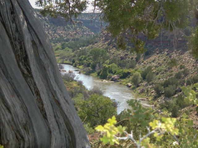 Springs Ranch North, Santa Rosa, NM 88435 (MLS #201900377) :: The Desmond Group
