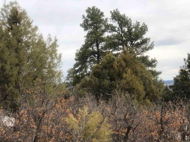 Unit 1, Tract 7, Ponderosa S/D, Chama, NM 87520 (MLS #201901235) :: The Very Best of Santa Fe