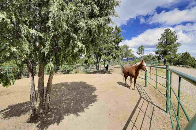 15 Lightning Ridge Road, Santa Fe, NM 87505 (MLS #201901537) :: The Desmond Group