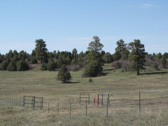 0 Tracts B & C Willow Creek, Chama, NM 87520 (MLS #201902099) :: Stephanie Hamilton Real Estate