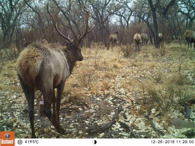 Bosque Retreat, Belen, NM 87006 (MLS #201903147) :: The Very Best of Santa Fe