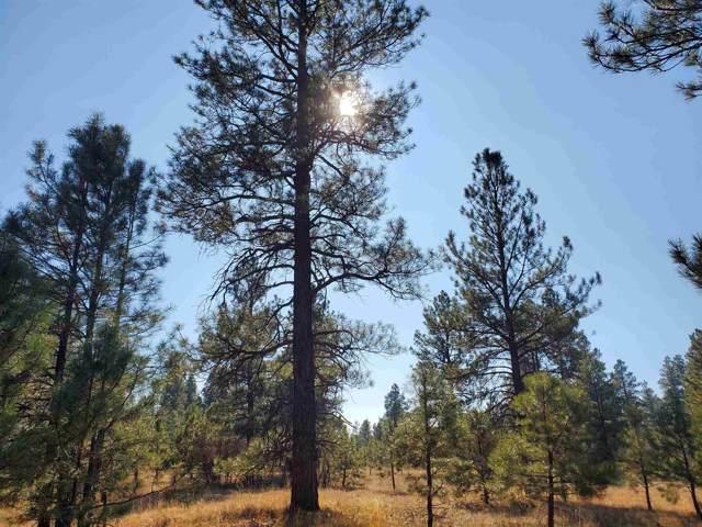 North Pine, Chama, NM 87520 (MLS #201905307) :: The Desmond Group