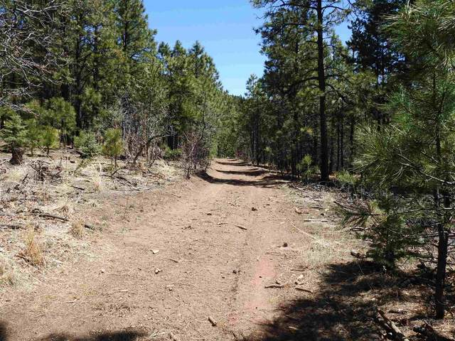 22 Hwy 276, Rociada, NM 87742 (MLS #202001379) :: The Very Best of Santa Fe