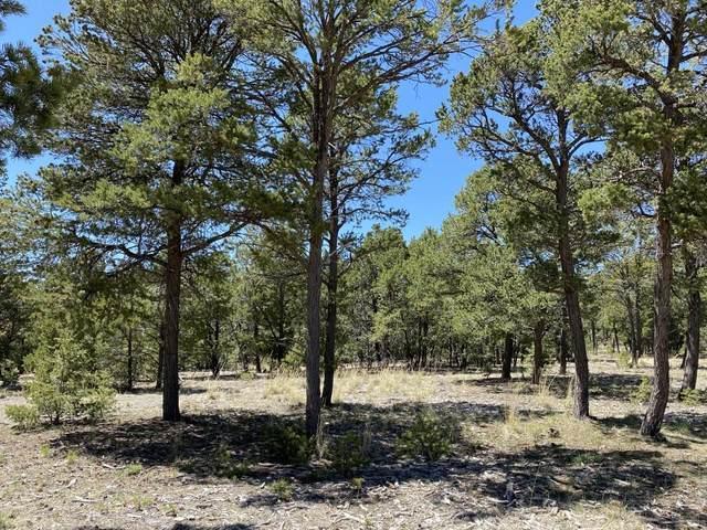 10 Wild Wings Circle, Pecos, NM 87552 (MLS #202001430) :: The Very Best of Santa Fe