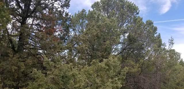 5 Cedar Hill Drive, Cedar Crest, NM 87008 (MLS #202001628) :: The Very Best of Santa Fe