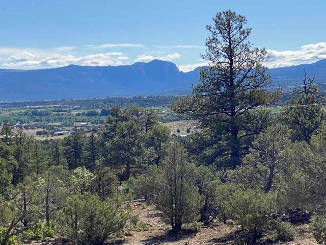0 Camino Thomas, Los Ojos, NM 87551 (MLS #202002074) :: The Desmond Hamilton Group