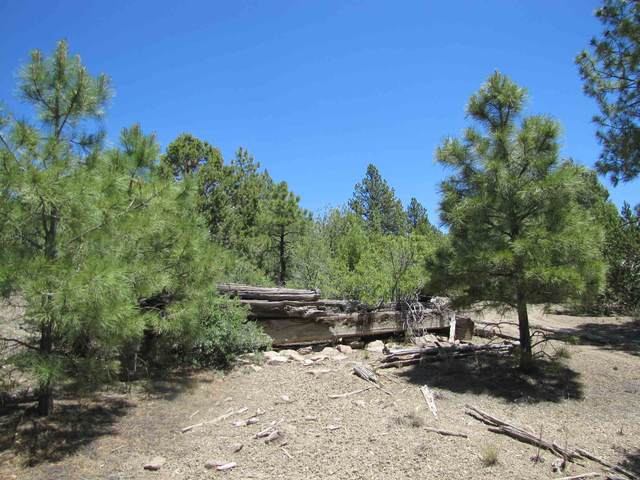 151 Acres Top Of Alamitos Canyon, Pecos, NM 87552 (MLS #202002561) :: The Very Best of Santa Fe