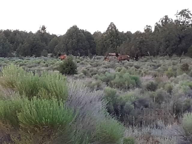 4 James Valley Ranch, Ramah, NM 87321 (MLS #202002906) :: The Very Best of Santa Fe