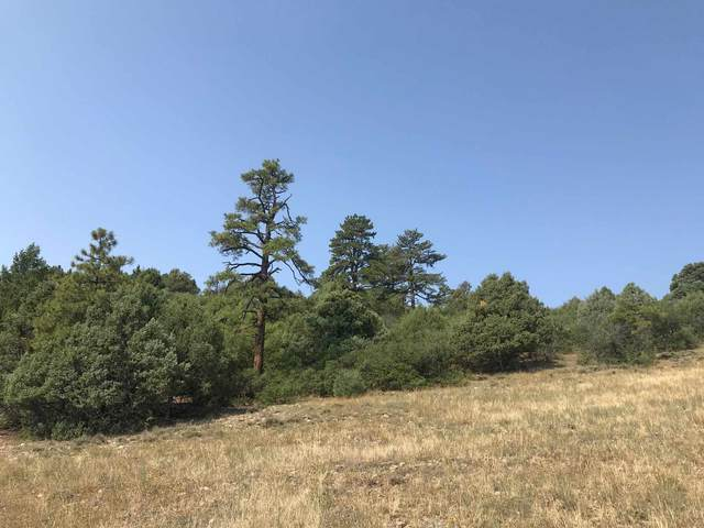 1 10A, Chama, NM 87520 (MLS #202003511) :: Neil Lyon Group   Sotheby's International Realty