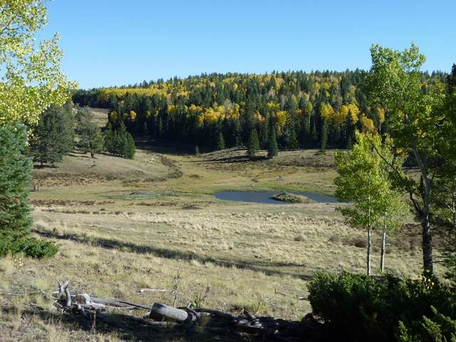 TBD Forest Service Road 91, Taos, NM 87581 (MLS #202003759) :: The Very Best of Santa Fe
