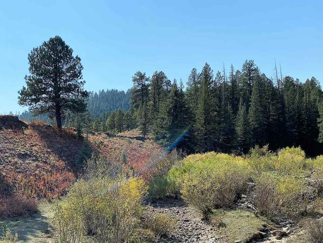 Crystal Springs Drive, Cuba, NM 87013 (MLS #202004411) :: Summit Group Real Estate Professionals