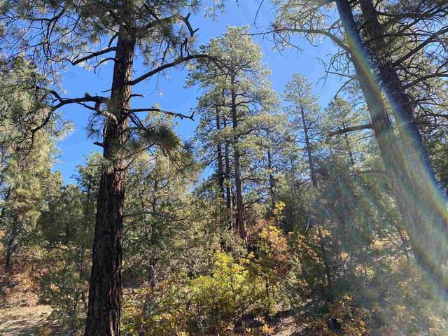 Tract 77 Unit 7, Ponderosa, Chama, NM 87520 (MLS #202004488) :: Summit Group Real Estate Professionals