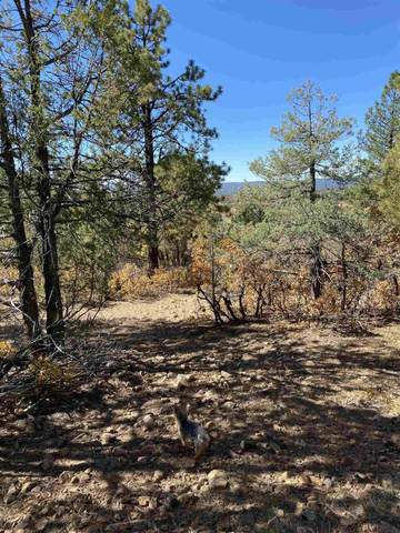Tract 42 Unit 7, Ponderosa, Chama, NM 87520 (MLS #202004505) :: The Very Best of Santa Fe