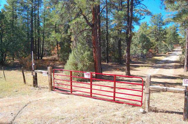 25425 Hwy 84, Tierra Amarilla, NM 87575 (MLS #202004513) :: Summit Group Real Estate Professionals