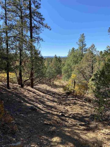 Tracts 40 & 42 Unit 7, Ponderosa, Chama, NM 87520 (MLS #202004553) :: The Very Best of Santa Fe