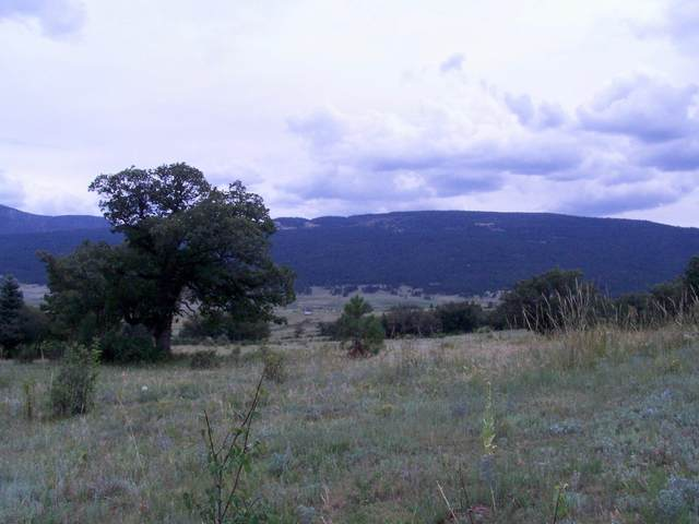 Ranch, Chacon, NM 87713 (MLS #202100006) :: Stephanie Hamilton Real Estate
