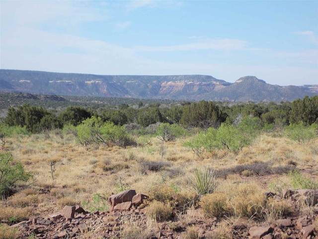 59 Bull Canyon Ranches, Newkirk, NM 88417 (MLS #202100148) :: Stephanie Hamilton Real Estate