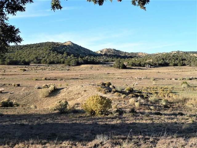 Quemado, NM 87829 :: Berkshire Hathaway HomeServices Santa Fe Real Estate