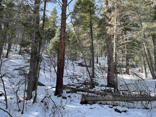 Lot 48 Falls Creek Road, Brazos, NM 87520 (MLS #202101000) :: Stephanie Hamilton Real Estate