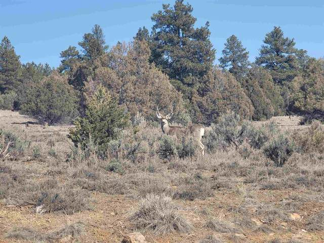 Lot 21-B & 20-A Laguna Vista Subdivision, Chama, NM 87520 (MLS #202101199) :: Stephanie Hamilton Real Estate