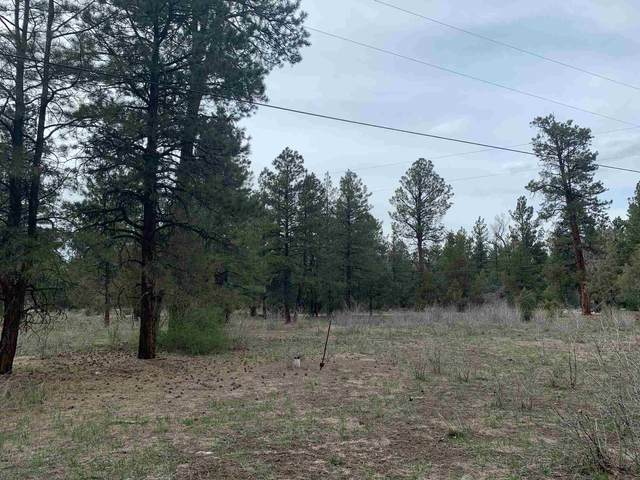 88,89 Private Road 1750, Chama, NM 87520 (MLS #202101653) :: Summit Group Real Estate Professionals