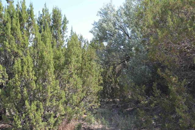 Tr D Lot 4A Duende Dr, Ojo Caliente, NM 87549 (MLS #202102594) :: The Very Best of Santa Fe