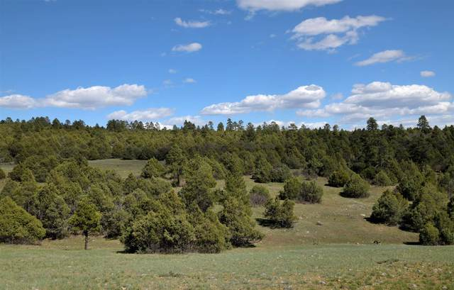 TBD Raven Road, Chama, NM 87520 (MLS #202102970) :: Summit Group Real Estate Professionals