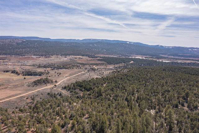 TBD Us Forest Rd #1008, Gallina, NM 87017 (MLS #202103000) :: Neil Lyon Group | Sotheby's International Realty