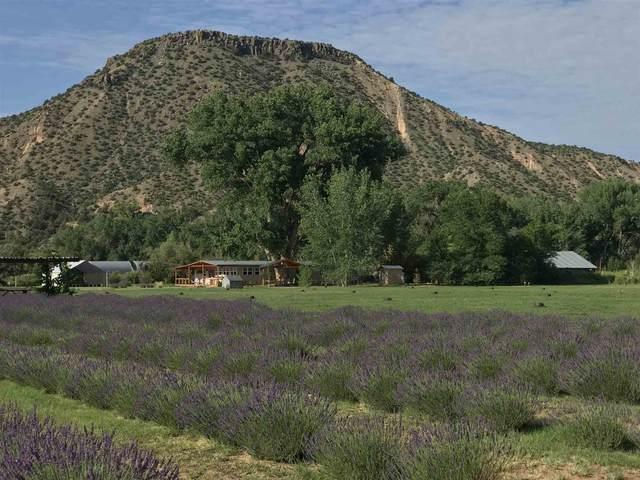 PURPLE Adobe Lavender Farm, Abiquiu, NM 87510 (MLS #202103225) :: The Very Best of Santa Fe